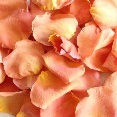 Лепестки оранжевых роз