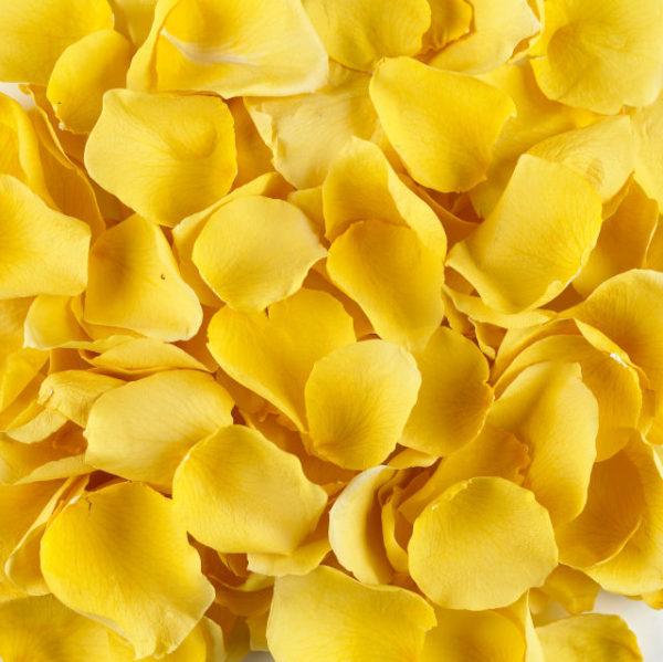 Лепестки жёлтых роз