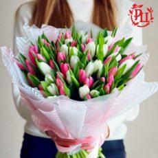 Тюльпан (Голландия)