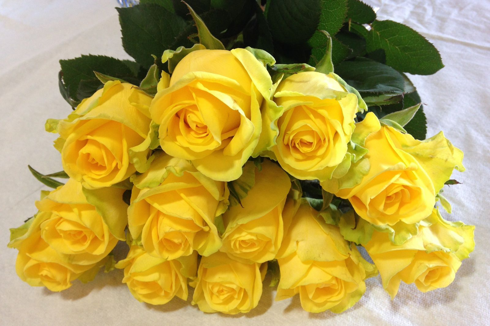 Ред наоми роза фото