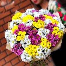 31 кустовая хризантема